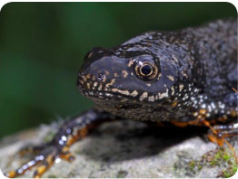 newt-survey-01
