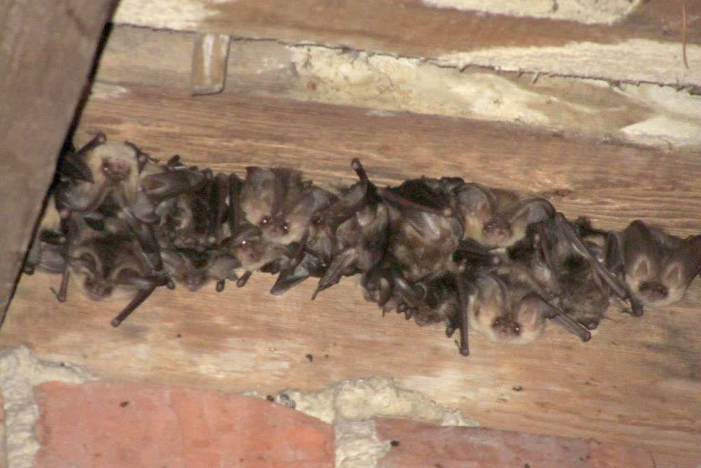 Bats inside of a building
