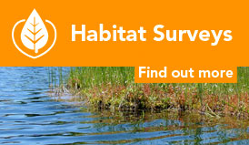 Habitat surveys