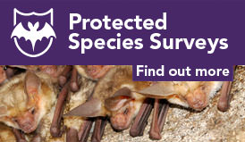 Protected species surveys