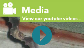 Media - View our videos
